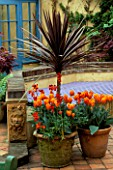 TERRACOTTA PATIO: CONTAINERS PLANTED WITH CORDYLINE AUSTRALIS PURPUREA  WALLFLOWERS AND TULIP PRINSES IRENE