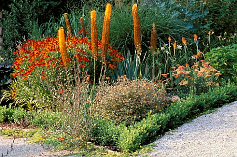 THE_RILL_GARDEN_AT_EASTLEACH_HOUSE__GLOUCESTERSHIRE_LOLLIPOP_SORBUS_ARIA_LUTESCENS__EREMURUS_CLEOPAT