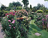 A GRASS PATH CUTS BETWEEN BORDERS OF ENGLISH ROSES IN CAROLYN HUBBLES GARDEN  SHROPSHIRE