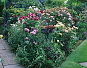 BORDER IN CAROLYN HUBBLES GARDEN  SHROPSHIRE: ROSES INCLUDING THE WEEPING STANDARD ROSE PAUL TRANSON