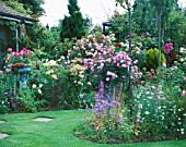 LAWN AND BORDERS IN CAROLYN HUBBLES GARDEN  SHROPSHIRE: ROSES INCLUDING THE WEEPING STANDARD ROSE PAUL TRANSON AND THE PINK ROSE FLOWER CARPET