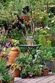 COLIN AND RUTH LORKINGS GARDEN  SUFFOLK: GREEN TABLE WITH METAL CONTAINER WITH ECHEVERIAS. RHUBARB FORCING POT  AEONIUM ZWARTKOP  POTS OF HALF HARDY PERENNIALS.