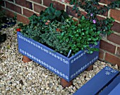 BLUE WOODEN BOX DECORATED WITH WHITE FLOWERS PLANTED WITH VIOLA LAURA CAWTHORNE  STRAWBERRY VIVA ROSA  THYMUS SILVER POSIE AND HELICHRYSUM ITALICUM