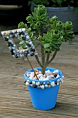 SHELL DECORATED FRAME IT POT PLANTED WITH AEONIUM BALSAMIFERA WITH A MULCH OF SHELLS AND WHITE PEBBLES. DESIGNER: CLARE MATTHEWS