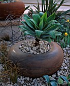 RUSTY METAL POT PLANTED WITH AGAVE ATTENUATA. CIRC GARDEN  CHELSEA 2001  DESIGNER: ANDY STURGEON