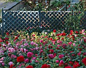 STAINLESS STEEL TEEPES AND TRELLIS BY ALISON ARMOUR-WILSON WITH DAVID AUSTIN ROSES