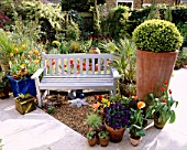 BACK GARDEN WITH MARBLE FLOOR  TERRACOTTA POT WITH BOX BALL  BLUE BENCH  TULIPS JESTER AND REDSHINE   AND GRAVEL DESIGNER: LISETTE PLEASANCE