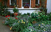 FRONT GARDEN: WITH TULIPS AND FORGET-ME-NOTS. DESIGNER: LISETTE PLEASANCE