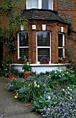 FRONT GARDEN:  TULIPS AND FORGET-ME-NOTS. DESIGNER: LISETTE PLEASANCE