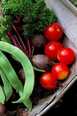 TRUG_FILLED_WITH_FRESHLY_HARVESTED_TOMATOES__PARSLEY__RUNNER_BEANS_AND_BEETROOT_WODAN