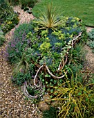 WICKERWORK BOAT WITH ROPE FILLED WITH FESTUCA GLAUCA AND CORDYLINE  IN DAVID AND MARIE CHASES GARDEN  HAMPSHIRE
