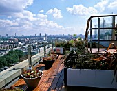 AFRICAN THEMED ROOF TERRACE- VIEW OVER LONDON:  MIXED SEMPERVIVUMS  PHORMIUM TENAX  P. PLATTS BLACK  AGAPANTHAS ALBA  CAREX BUCHANANII AND HARDWOOD IROKO DECKING. DESIGN:S WOODHAMS