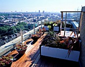 AFRICAN THEMED ROOF TERRACE- VIEW OVER LONDON:  MIXED SEMPERVIVUMS  PHORMIUM TENAX  P.PLATTS BLACK  AGAPANTHAS ALBA  CAREX BUCHANANII ON HARDWOOD IROKO DECKING.DESIGN:S WOODHAMS