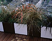 AFRICAN THEMED ROOF TERRACE: CREAM & CHOCOLATE BROWN POWDER COATED CONTAINERS WITH PHORMIUM TENAX RAINBOW QUEEN  CAREX BUCHANANII DESIGN: S. WOODHAMS