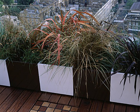 AFRICAN_THEMED_ROOF_TERRACE_CREAM__CHOCOLATE_BROWN_POWDER_COATED_CONTAINERS_WITH_PHORMIUM_TENAX_RAIN