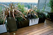 AFRICAN THEMED ROOF TERRACE: CREAM AND CHOCOLATE BROWN POWDER COATED CONTAINERS WITH PHORMIUM TENAX RAINBOW QUEEN  ASTELIA SILVER SPEER ON IROKO DECKING. DESIGN: S. WOODHAMS
