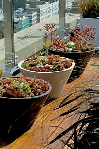AFRICAN_THEMED_ROOF_TERRACE_SERIES_OF_THREE_CREAM_AND_CHOCOLATE_BROWN_CONCRETE_PLANTERS___PLANTED_WI