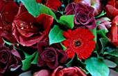FLOWERBOX FLORAL DISPLAY: AMARYLLIS LIBERTY  GERBERA RED STAR  APPLE AND A RED ROSE