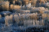 PRAIRIE PLANTING IN FROST AT LADY FARM  SOMERSET