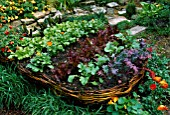 RAISED WICKER BED IN CHILDRENS GARDEN PLANTED LIKE A BOAT WITH CARROTS  SWISS CHARD  CHIVES  LETTUCE  RADISH  SPRING ONIONS  MARIGOLD AND STRAWBERRIES. CHELSEA 2002