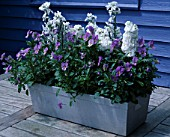METAL CONTAINER ON TABLE WITH STOCKS AND BLUE VIOLAS. DESIGNER: CLARE MATTHEWS