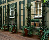 COURTYARD WITH DECKING  MIRRORS  TRELLIS  TERRACOTTA POTS WITH TRAILING IVY AND BRICK WALL. DESIGNER: CLAIRE MEE