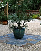 BLUE GLAZED POT ON GRAVEL PATIO PLANTED WITH A JELLY PALM (BUTIA CAPITATA). DESIGNER: CLARE MATTHEWS