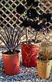 GROUP OF CONTAINERS PAINTED BY CLARE MATTHEWS AND PLANTED WITH A PHORMIUM  AEONIUM ZWARTKOP AND CAREX COMANS BRONZE FORM