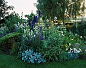 LAUNA SLATTERS GARDEN  OXFORDSHIRE: WHITE AND BLUE BORDER WITH CENTRANTHUS  BLUE DELPHINIUMS  EPILOBIUM AND HEBE RAKIENSIS