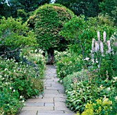 STONE PATH BETWEEN THE WHITE BORDERS LEADING TO A PORTUGAL LAUREL  PRUNUS LUSITANICA. CRATHES CASTLE GARDENS  SCOTLAND