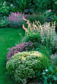 LAUNA SLATTERS GARDEN OXFORDSHIRE: BORDER BESIDE POND PLANTED WITH HEBE RAKAIENSIS  PHUOPSIS STYLOSA  VERBASCUM AND LYCHNIS FLOS - JOVIS
