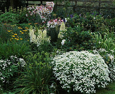 PETTIFERS_GARDEN__OXFORDSHIRE_CHARTREUSE_BORDER_IN_SUMMER_WITH_LILIUM_REGALE__DELPHINIUMS_AND_TANACE