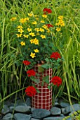 RED MOSAIC CONTAINER PLANTED WITH BIDENS YELLOW BREEZE AND VERBENA SUNMARISU. DESIGNER: CLARE MATTHEWS