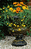 BLACK AND GOLD SPLATTERED URN PLANTED WITH GAZANIA GAZOO AND BIDENS YELLOW BREEZE. DESIGNER: CLARE MATTHEWS