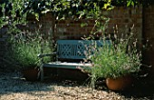 BLUE BENCH FLANKED BY TERRACOTTA CONTAINERS PLANTED WITH LAVANDULA AUGUSTIFOLIA AND OLEA EUROPAEA. DESIGNER: CLARE MATTHEWS
