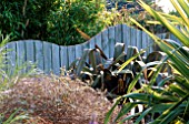 SEASIDE GARDEN: BLUE WOODEN WAVE SHAPED FENCE SURROUNDED BY PHORMIUM PURPUREUM AND PHORMIUM TENAX VARIEGATUM. DESIGNER: MARK LAURENCE