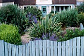 SEASIDE GARDEN: FRONT GARDEN WITH BLUE WOODEN WAVE SHAPED FENCE WITH PEROVSKIA AND PHORMIUM TENAX VARIEGATUM. DESIGNER: MARK LAURENCE