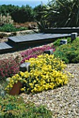 SEASIDE GARDEN  GUERNSEY: GRAVEL  WOODEN BOARDWALK  THRIFT  GROYNES AND HELIANTHEMUM WISLEY PRIMROSE