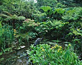 DESIGNER: JANE RUSSELL  MILLE FLEURS  GUERNSEY: POND IN THE WOODLAND WTH A HERON BY JASON LE PROVOST SURROUNDED BY DICKSONIA ANTARCTICA  GUNNERA  CYPERUS AND IRIS