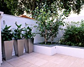 WHITE ROOF TERRACE WITH THREE METAL CONTAINERS PLANTED WITH ZANTEDESCHIA AETHIOPICA AND RAISED BED WITH BETULA UTILIS VAR JACQUEMONTII. DESIGNER: AMIR SCHLEZINGER/ MY LANDSCAPES