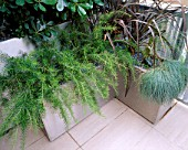 ROOF TERRACE WITH METAL CONTAINERS PLANTED WITH GREVILLEA  PHORMIUM BRONZE BABY  FESTUCA GLAUCA ELIJAH BLUE AND PITTOSPORUM TOBIRA. DESIGN : AMIR SCHLEZINGER/ MY LANDSCAPES