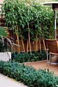 WOODEN TERRACE BESIDE HOUSE WITH TABLE AND CHAIRS  PHYLLOSTACHYS VIVAX AUREOCALLIS AND BOX.  DESIGN : AMIR SCHLEZINGER/ MY LANDSCAPES