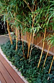 WOODEN TERRACE BESIDE HOUSE WITH PHYLLOSTACHYS VIVAX AUREOCALLIS AND BOX.  DESIGN : AMIR SCHLEZINGER/ MY LANDSCAPES