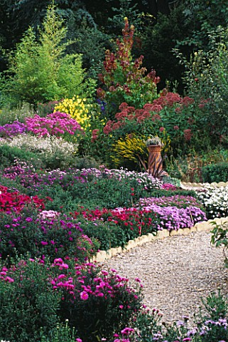 ASTERS_AT_THE_PICTON_GARDEN__WORCESTERSHIRE__WITH_PINK_ASTER_NOVAEANGLIAE_QUINTON_MENZIES__HELIANTHU