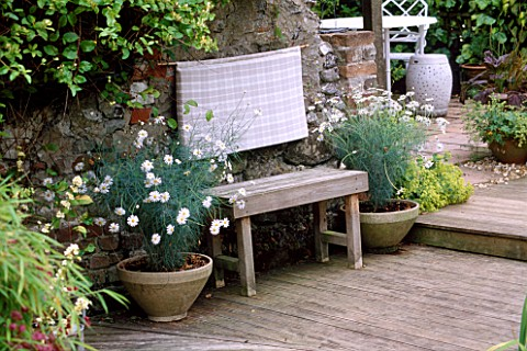 BENCH_MADE_OF_LEFT_OVER_DECKING_WITH_CONTAINERS_OF_ARGYRANTHEMUM_CHELSEA_GIRL_THE_FOVANT_HUT__WILTSH
