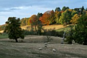 THE ARLEY ARBORETUM  WORCESTERSHIRE  IN AUTUMN: THE ARBORETUM SEEN FROM THE SEVERN VALLEY RAILWAY