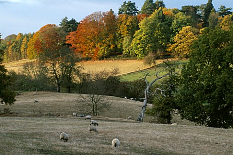 THE_ARLEY_ARBORETUM__WORCESTERSHIRE__IN_AUTUMN_THE_ARBORETUM_SEEN_FROM_THE_SEVERN_VALLEY_RAILWAY
