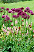 PETTIFERS  OXFORDSHIRE: ALLIUM PURPLE SENSATION   CIRSIUM RIVULARE ATROPURPUREUM AND PERSICARIA AFFINIS SUPERBA