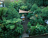 PETER REIDS GARDEN  HAMPSHIRE: BACK GARDEN FROM UPSTAIRS WITH PLACE TO SIT OF SAIL CANOPY AND DINGHY MASTS  DICKSONIA ANTARCTICA  CYATHEA DEALBATA (TREE FERN)  ROBINIA PSEUDOACACIA