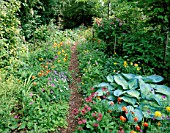 WOODCHIPPINGS  NORTHANTS: A SHADY PATH THROUGH THE OLD ORCHARD LINED WITH SINGLE AND DOUBLE FORMS OF MECONOPSIS CAMBRICA  HOSTAS  ASTRANTIAS AND GERANIUM NODOSUM